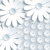 Stylish grey background with 3d white chamomile Stock Images