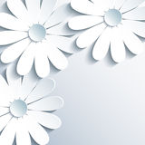 Stylish grey wallpaper with 3d white chamomile. Beautiful grey wallpaper with 3d white chamomile. Creative modern abstract background. Greeting or invitation Stock Photos