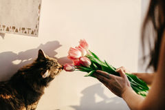 Stylish hipster girl and her cat smelling tulips in morning in r Royalty Free Stock Photos