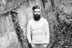 Stylish bearded man outdoor. Stylish hipster man with long beard in white shirt outdoor on stony wall background with green plant Royalty Free Stock Image