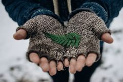 Stylish hipster traveler holding green leaf fern iin hands, save Stock Photos