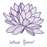 Stylish lotus flower Royalty Free Stock Photos