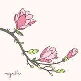 Stylish magnolia flower Royalty Free Stock Images