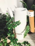 Stylish modern white watering can near green plants in sunny room. Metal funnel with fern and ivy leaves. Gardening concept stock image