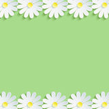 Stylish nature background with white chamomiles Royalty Free Stock Photography