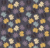 Stylish pattern with autumn Maple leaves Stock Photo