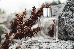 Bottle of perfume. Stylish Perfume bottle on the grey stone royalty free stock images