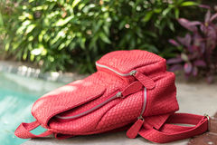 Stylish red leather snkeskin python rucksack near the swimming pool. Bali island. Stylish red leather snkeskin python rucksack near the swimming pool stock images
