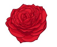 Stylish red rose Stock Images