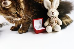 Stylish ring in red box and bunny and sweet cat on white backgro. Und, valentine`s day concept stock photography