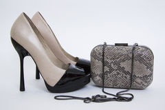 Stylish shoes and snakeskin cluth Stock Image