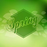 Stylish Spring seasonal card design Royalty Free Stock Photo