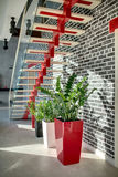 Stylish stair in modern interior Royalty Free Stock Photography