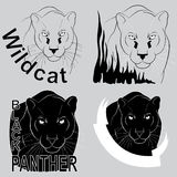stylish vector logo black panther Stock Photo