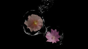 Stylish water balls. Stylish water globes with wild flowers. Clear colors on black background. 3d illustration Stock Image