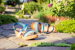 Stylish women's shoes, sandals in nature. A Stock Images