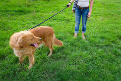 Stylish young woman and her pet dog golden retriever. Royalty Free Stock Photography