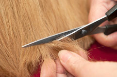 Stylist cutting split ends Stock Images