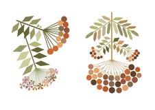 Stylization de las ramas del serbal del color Fotografía de archivo libre de regalías