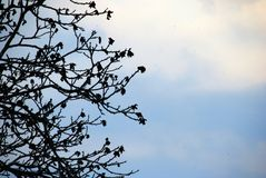 Stylize abstract branches on a background of the sky royalty free stock images