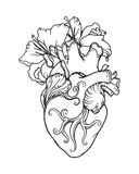 Stylized anatomical Human Heart drawing. Heart with white lilies in romantic style. Tattoo design, card template, Blooming Heart concept. Outline drawing Royalty Free Stock Photography