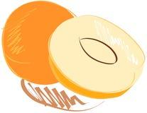 Stylized apricot isolated Stock Image