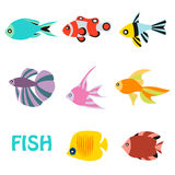 Stylized aquarium ornamental river and sea fish Royalty Free Stock Photo