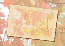 Stylized autumn background with frame for text Royalty Free Stock Images