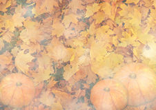 Stylized autumn background with leaves and pumpkins in golden tones Stock Image