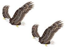 Stylized bald eagle. Cartoon stylized bald eagle decorative design illustration royalty free illustration