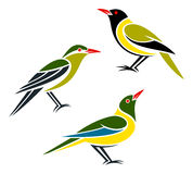 Stylized birds. Stylized orioles --- Western Oriole, Green Oriole and Green-headed Oriole Stock Images