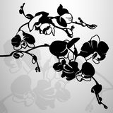 Stylized black orchid branch, vector illustration Royalty Free Stock Photos