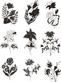 Stylized black and white flower designs Stock Photo