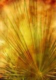 stylized blom- bild Fotografering för Bildbyråer