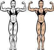 Stylized bodybuilder Stock Image
