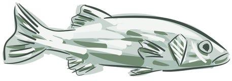 Stylized branzino isolated vector illustration
