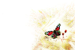 Stylized butterfly on a grunge background. Butterfly on a natural background to the transformation of grunge Stock Photo
