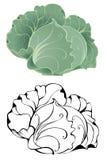 Stylized cabbage royalty free illustration