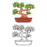 Cartoon Bonsai tree vector illustration