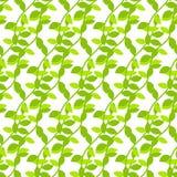 Stylized cartoon liana jungle seamless pattern. Stock Photography