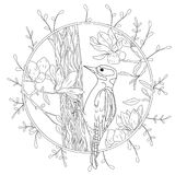 Stylized cartoon woodpecker on tree branch. Hand drawn sketch for adult antistress coloring page.  Royalty Free Stock Photography