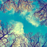 Stylized colorized vintage green branches and blue sky Stock Photography