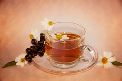 Stylized cup of tea Royalty Free Stock Photography