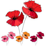 Stylized cute red poppy  on white background. Stock Photo