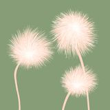 Stylized dandelions Royalty Free Stock Photos