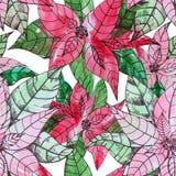 Stylized decorative pointsettia christmas seamless pattern desig Royalty Free Stock Images