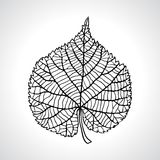 Stylized detail silhouette of leaf isolated on Stock Photos