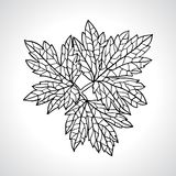 Stylized detail silhouette of leaf isolated on Stock Photography