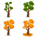 A stylized drawing of oak. Different times of the year. Set. illustration. A stylized drawing of oak. Different times of the year. Set. Vector illustration Royalty Free Stock Photography