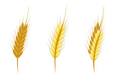 Stylized ear of wheat. Vector illustration of a stylized head wheat Royalty Free Stock Photos